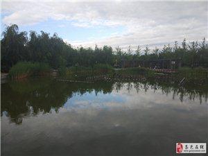 今天早晨的中兴公园非常凉快。昨天下午5点左右搂着太阳下雨,晚上11点又开始下雨。