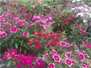 公园随拍小花