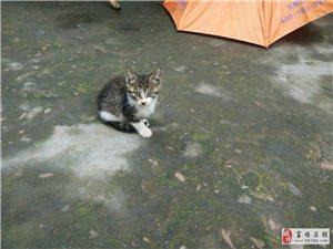 此小猫咪出售,有意者请拔打13458360951
