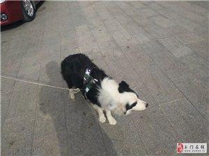 谁家的狗狗丢了啊,联系电话13079329993