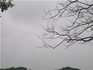 ��雨泛舟―�江行