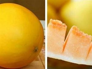 金塔农村的菠兰瓜你吃了吗?
