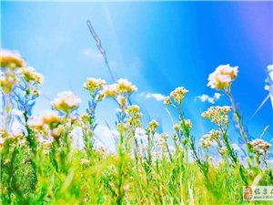人生有两种境界:一是痛而不言,二是笑而不语。痛而不言是一种智慧,人生在世,往往会因这样或那样的伤害而
