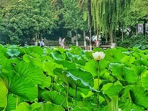 阳春门公园