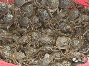 景泰县河蟹河虾助脱贫