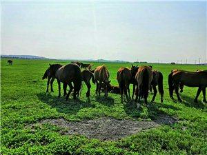 绿油油的草地,很美