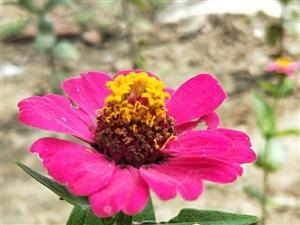 美��的花��