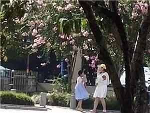 小�}莉收到�W友投稿,夏日炎炎,最美小女孩送清��