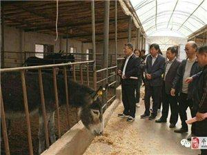 平川区发展黑毛驴产业纪实