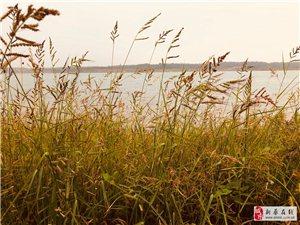 大美新蔡――�|湖水�炱�