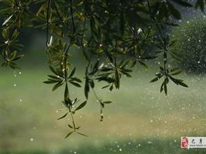 仲夏的雨/徐淑芳