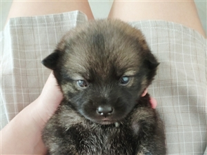 幼犬求�I�B