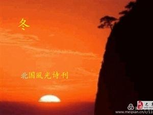 樱桃树下的守望作者/冬日的阳光
