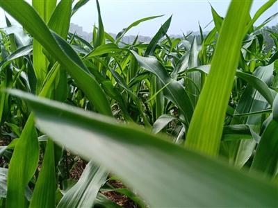 农夫有感,一片丰收之景……
