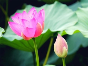 【青衣江每日小�S�v】7月26日六月二十四周五宜祭祀出行�油良{采忌�佑��浼烧疾�
