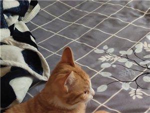 急需一只小公猫,给我家的小橘猫做伴。感谢。请来电:13893273269