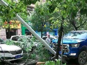 左岸发生一起交通事故,路边的树都撞倒了