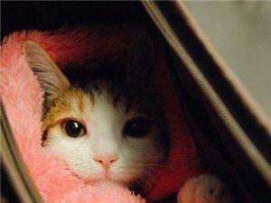 怎么这么萌,好想养一只猫猫,实在是太抓心啦!