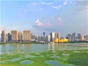 手机拍摄武昌沙湖公园。