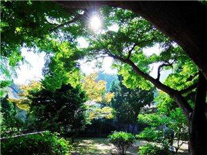 青岛崂山太清宫美景!
