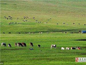 草原美张现英天蓝地青碧,湖静鱼儿肥。草深牛羊壮,鸟翔万里云。无垠大原野,