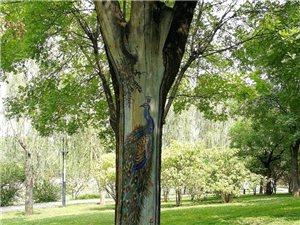 公园里那些特别的树儿