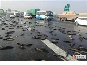 京港澳高速駐馬店段的路面上撒滿了魚,咋回事?