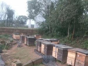 原生态蜂蜜,现采现卖,预计产量200斤,数量有限,先到先得,150元一斤,如果您有需要联系我,联系方
