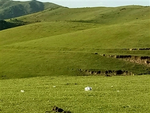草原上的垃圾