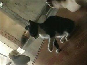 两只猫好玩一点。不孤单。不挑食儿长得快。