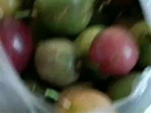 请问寻乌哪里会大量收百香果的,帮忙介绍一下
