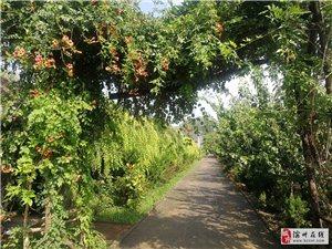 周恩来纪念园(滨州)雨后幽园静根植自然生满院绿荫地红星在心中