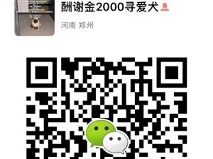 酬谢金2000元寻找爱犬(真实存在)