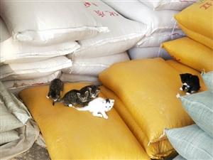 我家的小猫太多了,寻找爱小猫的家庭领养