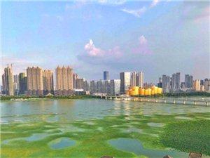 手机拍照武昌沙湖公园。