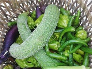 �G色蔬菜水果