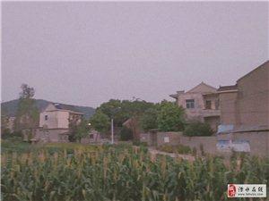 郑巷村的风景很美