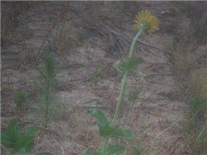 干涸的土地上――花开