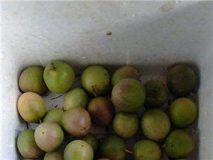 本人种植几十亩百香果,欢迎老板来收购