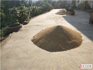大米,稻谷出售
