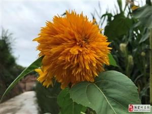 【摄影作品】秋天田园里的几朵小花