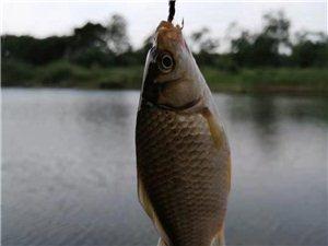 老同学就是这样钓鱼的,让我叹为观止。