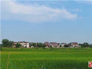 参观农村人居环境整治