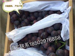 新鲜葡萄??????