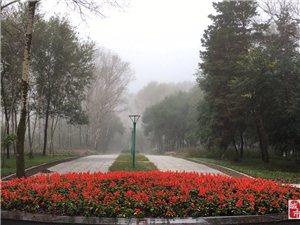 晨起雾漫漫
