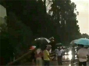 雷雨大风来袭,路边的树横倒在马路上,出行一定要注意安全!