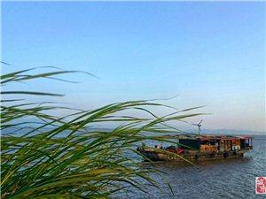 别对生活太失望毕竟还有诗和远方长江的美景和喇叭花的妖娆还有…你看不懂风曳狗尾巴花的时尚??