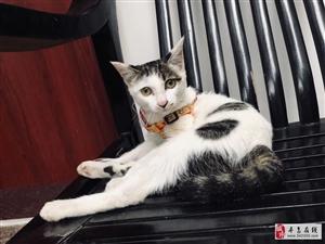 寻猫启事:东郊路附近失踪,脖子上挂两个铃铛,大家帮忙留意,谢谢!