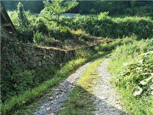 大河镇茶园村这条路什么时候弄好?下雨天车都像要翻车了一样,一年推一年哎……