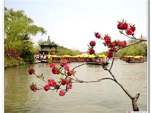 烟花三月下扬州,扬州更有瘦西湖